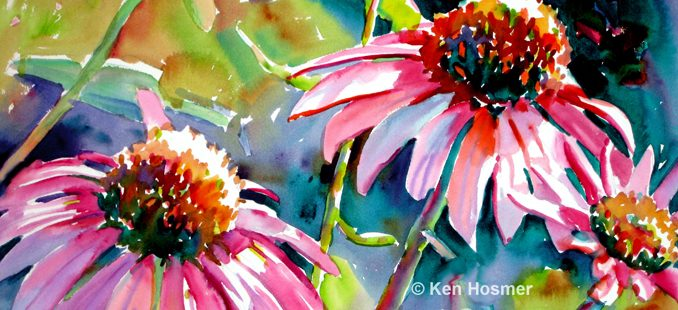 Cone Flowers-watercolor painting by Ken Hosmer